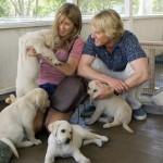 10 Film da vedere se ami gli Animali