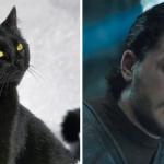 Se i Personaggi di Game of Thrones fossero dei Gatti
