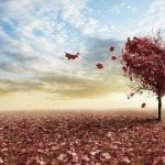 Perché ti amo: la dolce poesia di Hermann Hesse